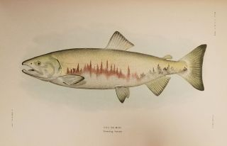 The Fishes of Alaska. From Bulletin of the Bureau of Fisheries. Volume XXVI, 1906. ALASKA /...