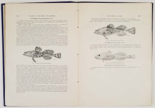 The Fishes of Alaska. From Bulletin of the Bureau of Fisheries. Volume XXVI, 1906...