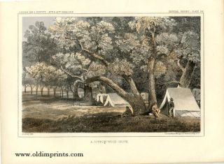 A Cottonwood Grove.[Vintage Pacific Railroad Survey Lithograph]. COTTONWOOD