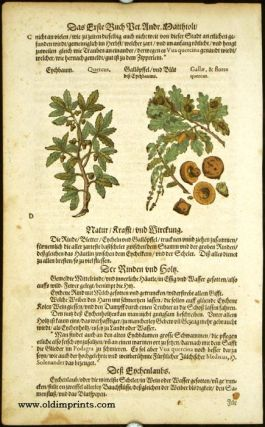 Quercus. Gallae, & flores quercus. GERMAN HERBAL - OAK