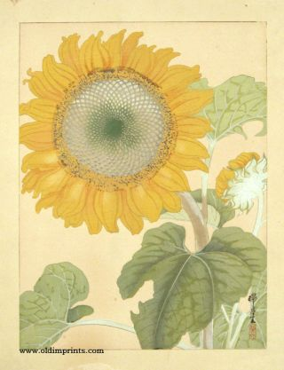 Untitled Japanese woodcut of a Sunflower. SUNFLOWER.