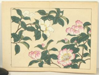 Shiki no Hana 四季の花 Flowers of the Four Seasons). Winter. JAPAN - BOTANICAL WOODBLOCK BOOK.