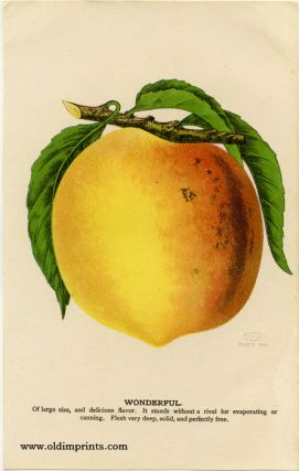 Wonderful (PEACH). CHROMOLITHOGRAPH - AMERICAN