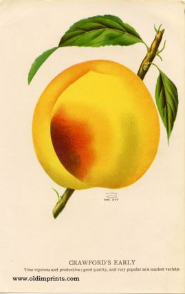 Crawford's Early (PEACH). CHROMOLITHOGRAPH - AMERICAN