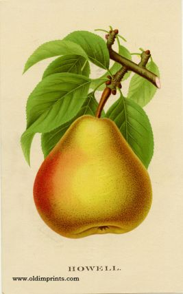 Howell (PEAR). CHROMOLITHOGRAPH - AMERICAN