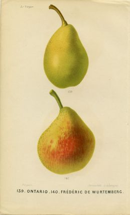 139. Ontario. 140. Frederic de Wurtemberg. LE VERGER - PEARS