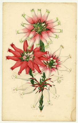 The Floral World. Beautifully Coloured Plates. [cover title]