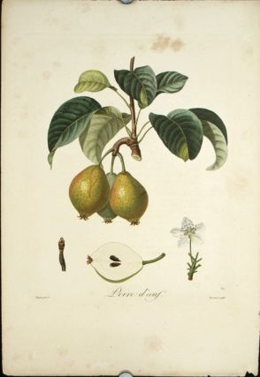 "Poire d'oeuf. (Color stipple engraving from ""Traite des Arbres Fruitiers""). PEARS"