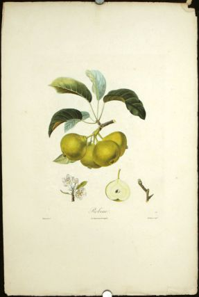 "Robine. (Color stipple engraving from ""Traite des Arbres Fruitiers""). PEARS"