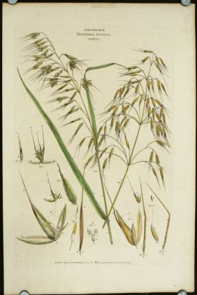 "Classis III. Ordo II. Triandria Digynia Avena. [Wild Oat]. (From John Miller ""An Illustration of..."