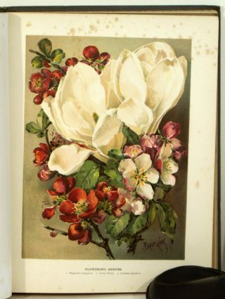 The Flower Grower's Guide. Div. I. CHROMOLITHOGRAPHS, John Wright