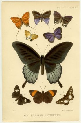 New Bornean Butterflies. INSECTS - BUTTERFLIES