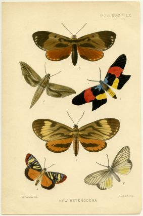 New Heterocera. INSECTS - BUTTERFLIES