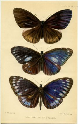 New Species of Euploea. INSECTS - BUTTERFLIES