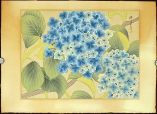 Untitled: Japanese woodcut of blue and white hydrangea. HYDRANGEA.