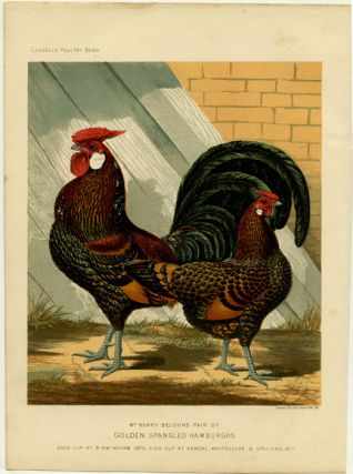 Mr. Henry Beldon's Pair of Golden Spangled Hamburghs. Cock Cup at Birmingham 1870, Hen Cup at...