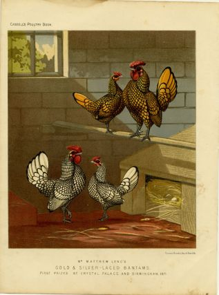 Mr. Matthew Leno's Gold & Silver-Laced Bantams, First Prizes at Crystal Palace and Birmingham,...