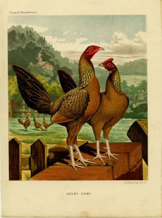 Henny Game. CASSELL'S CHROMOLITHOGRAPHS