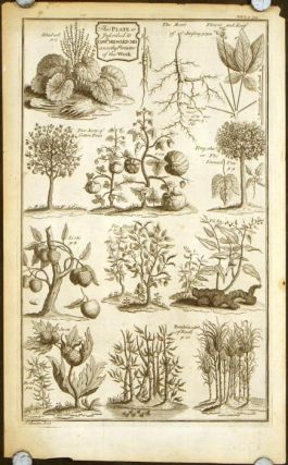 "Untitled sheet of plants of China with notation: ""This plate is inscribed to Edwd. Milward MD a..."