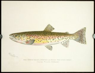 Game Birds and Fishes of North America. (Plates originally published in Fish and Game of the...