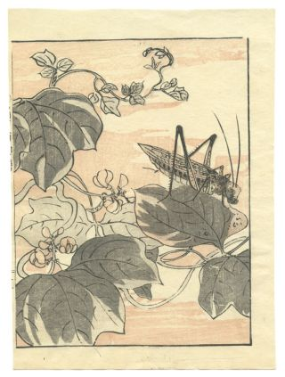 Untitled woodblock print of a grasshopper. INSECTS