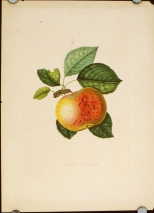 Pomme Averill. APPLE