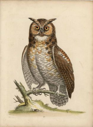 The Great Horned Owl. EDWARDS - EIGHTEENTH CENTURY COPPERPLATE ENGRAVINGS