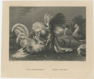 Der Hahnenkampf. Cocks-Fighting. FRANS SNYDERS