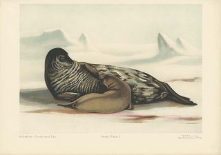 Antarctic (Discovery) Exp. Birds, Plate 1