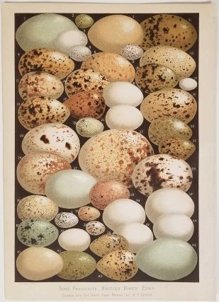 Some Favourite British Birds' Eggs II. BIRD EGGS