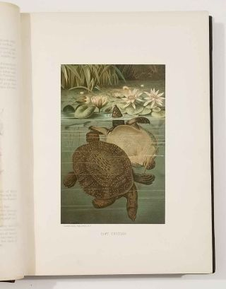 Our Living World. An Artistic Edition of the Rev. J. G. Wood's Natural History of Animate Creation.
