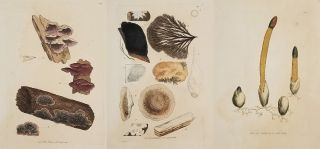 Five handcolored engravings of fungi from an early nineteenth century publication.