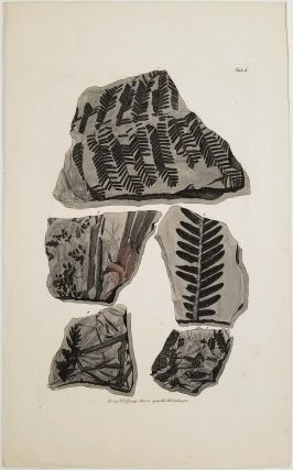 ANTIQUE PRINT ENGRAVINGS - TWO SHEETS likely from different publications. FOSSIL ROCK SPECIMENS