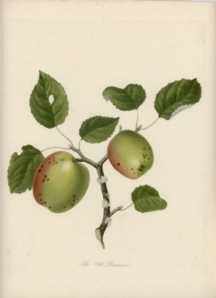 The Old Pearmain. APPLE - HEIRLOOM FRUIT