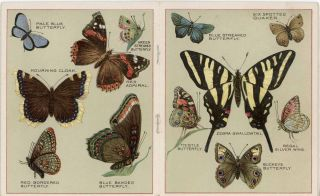 Butterflies of America. Compliments of Chase & Sanborn, Importers of Tea and Coffee, Boston - Chicago - Montreal.