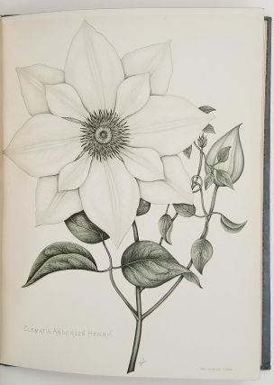 Twelve White Flowers. 19TH CENTURY FLOWER LITHOGRAPHS, Frances Livings, A