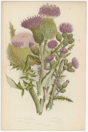 The Flowering Plants of Great Britain.