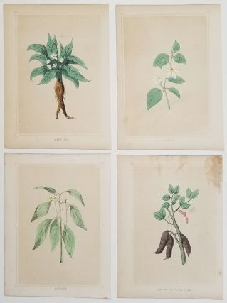 Camphire. Mandrake. Storax. Locust or Carob Tree. FOUR ANTIQUE BOTANICAL PRINTS. BOTANICAL -...