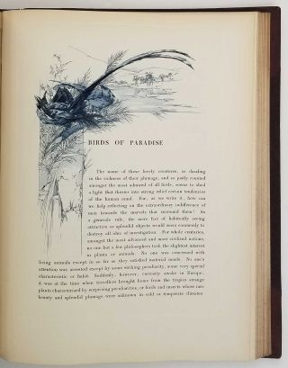 Art and Letters. An Illustrated Review. Second Volume. [with article Birds of Paradise, and much more]