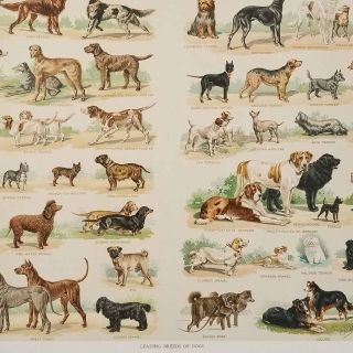 Leading Breeds of Dogs.